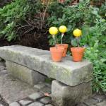 Stenbänk med citronblommor