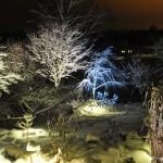 Belysta träd varmt/kallt ljus
